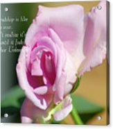True Friendship Is Like A Rose Acrylic Print