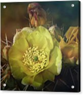 True Golden Beauty  Acrylic Print