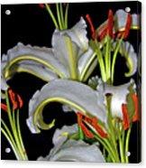 True Lilies Acrylic Print by Andy Za