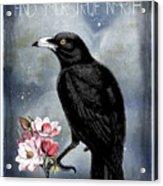 True North Crow And Magnolias Acrylic Print