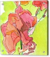 Trumpet Vine Blossom Acrylic Print
