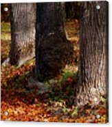Trunk And Leaves Acrylic Print by Joyce Kimble Smith
