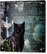 Truth Or Stare... Acrylic Print