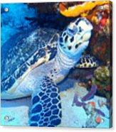 Tucked Away Turtle Acrylic Print