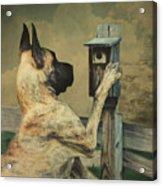 Tucker And The Birdhouse Acrylic Print
