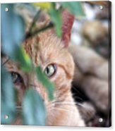 Tucker - The Cat Acrylic Print