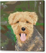 Tucker The Welsh Terror Acrylic Print