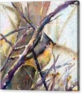 Tuffed Titmouse 2 Acrylic Print