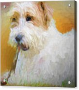 Tuffy The Russell Terrier Acrylic Print