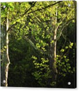 Branches Of Lovely Light Acrylic Print