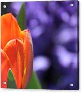 Tulip And Hyacinth Acrylic Print