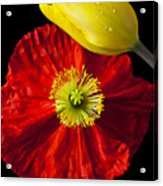 Tulip And Iceland Poppy Acrylic Print by Garry Gay