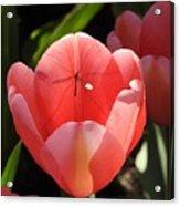 Tulip And The Crane Fly Acrylic Print