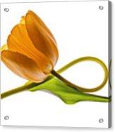 Tulip Art On White Background Acrylic Print