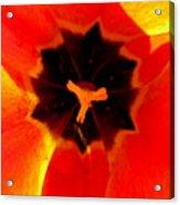 Tulip Art Acrylic Print