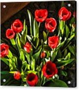 Tulip Beauties Acrylic Print