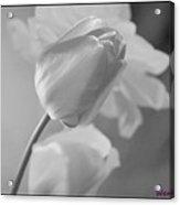 Tulip Black N White Acrylic Print
