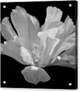 Tulip - Bw Acrylic Print