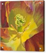 Tulip Closeup No. 1 Acrylic Print