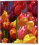 Tulip Confusion Acrylic Print