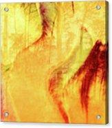 Tulip Dawn-2 Acrylic Print