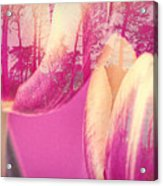 Tulip Dawn Acrylic Print