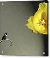 Tulip Dreams IIi Acrylic Print