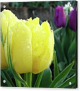 Tulip Flowers Artwork Tulips Art Prints 10 Floral Art Gardens Baslee Troutman Acrylic Print