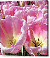 Tulip Flowers Garden Art Pink Tulips Baslee Troutman Acrylic Print