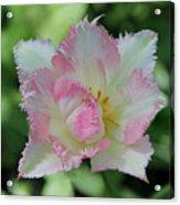 Tulip Galerie Acrylic Print