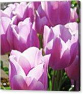Tulip Garden Flowers Purple Lavender Pastel Art Baslee Troutman Acrylic Print