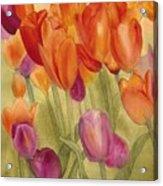 Tulip Glory Acrylic Print