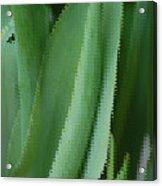 Tulip Greens Acrylic Print