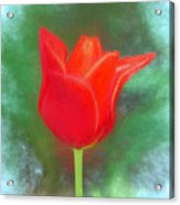 Tulip In Abstract. Acrylic Print