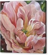 Tulip In Pink Acrylic Print