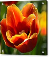 Tulip On Fire Acrylic Print