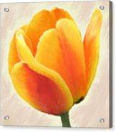 Tulip Orange Acrylic Print