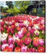 Tulip Parade Acrylic Print