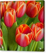 Tulip Patch Acrylic Print