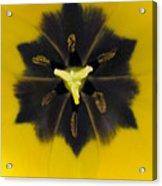 Tulip Pixie Acrylic Print