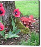 Tulip Poppie Acrylic Print