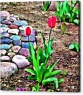 Tulip Rock Garden Acrylic Print