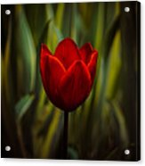 Tulip Acrylic Print by Rod Sterling