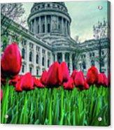 Tulip Row Acrylic Print