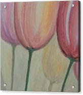 Tulip Series 1 Acrylic Print