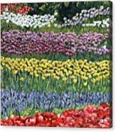 Tulip Tme Acrylic Print