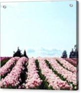 Tulip Town 10 Acrylic Print