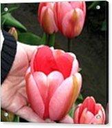 Tulip Town 15 Acrylic Print