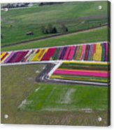 Tulip Town Aerial Acrylic Print