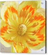 Tulip Tree Flower Acrylic Print